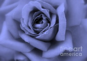 Shades Of Blue Prints - Blue Rose Abstract Print by Carol Groenen