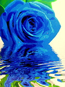 Amy Bradley Art - Blue Rose by Amy Bradley