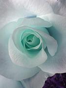 Blue Rose Print by Robin Hewitt