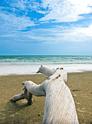 Nawarat Namphon Photo Prints - Blue sea and sky with log on the beach Print by Nawarat Namphon