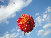 Red Flowers Art - Blue Sky Nature art prinst Red Dahlia Flower by Baslee Troutman Nature Art Prints