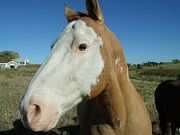 Youthful Photo Originals - Blue Sky Palomino  by Brian  Maloney