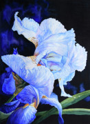 Watercolor Art Prints Posters - Blue Summer Iris Poster by Hanne Lore Koehler