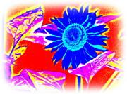 Blue Sunflower Print by Pauli Hyvonen