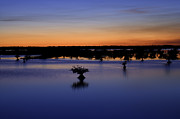 Mangroves Prints - Blue Sunset Mangroves Print by Rich Franco