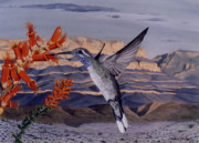 Photorealism Prints - Blue Throated Hummingbird Print by Michael Earney