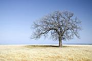 Lone Tree Prints - Blue to Remember Print by Mike Irwin