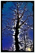 Alexis Rotella Framed Prints - Blue Tree Framed Print by Alexis Rotella