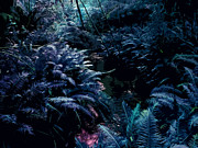 Tropical Digital Art Originals - Blue tropical surreal forest by Phill Petrovic