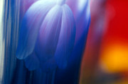 Unique Glass Art Posters - Blue Tulip Poster by Etti Palitz