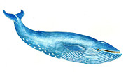 Sea Life Art Prints - Blue Whale Print by Michael Vigliotti