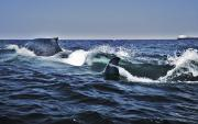 Hunger Prints - Blue Whales Print by Mike Raabe