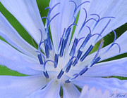 For The Art Collector Prints - Blue Wild Flower Print by Paul Ward