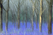 Dragged Prints - Bluebell Print by Don Hooper