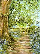 Frances Evans - Bluebell Path