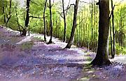 Bluebell Prints - Bluebell wood Print by Paul Dene Marlor
