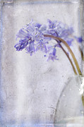 Layered Prints - Bluebells II Print by Marion Galt