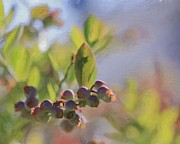 Abstract Blueberries Framed Prints - Blueberries And Sunlight Framed Print by Heidi Smith