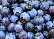 Fresh Food Prints - Blueberries Print by Carol Groenen