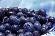 Blueberry Posters - Blueberries Freshly Picked Poster by Sharon  Talson