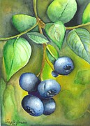 Blueberry Paintings - Blueberrries by Angela Armano