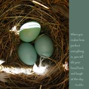 Hatch Framed Prints - Bluebird Eggs with Buddha Quote Framed Print by Heidi Hermes