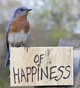 John Crothers - Bluebird of Happiness
