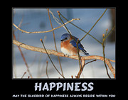 Motivational Sayings Prints - Bluebird Of Happiness Print by Smilin Eyes  Treasures
