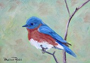 Birds - Bluebird on a limb by Pauline Ross