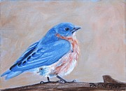Birds - Bluebird by Pauline Ross