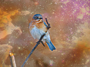 Masked Digital Art Posters - Bluebird Perched In Space Poster by J Larry Walker