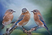 Trio Photo Originals - Bluebird Trio by Bonnie Barry