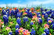 Shannon Story Framed Prints - Bluebonnets and Paintbush Framed Print by Shannon Story