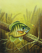 Fishing Painting Posters - Bluegill and Jig Poster by JQ Licensing
