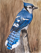 Bluejay Paintings - Bluejay by Angela Adam