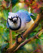 Bluejay Digital Art Posters - Bluejay Poster by Betty LaRue