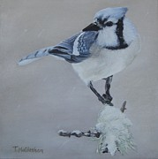 Bluejay Painting Metal Prints - Bluejay in Winter Metal Print by Traci McGlashan