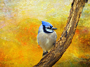 Layered Textures Prints - Bluejay Peeking Print by J Larry Walker