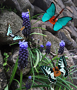Lepidopterans - Blues by Eric Kempson
