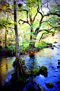 Florida Landscape Framed Prints - Blues in Florida Swamp Framed Print by Carol Groenen