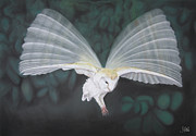 Blurred Drawings Framed Prints - Blurred Wings Framed Print by John Hebb