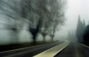 Bare Trees Posters - Blurry bare trees visible through the fog Poster by Sami Sarkis