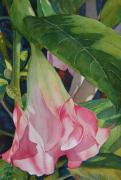 Datura Paintings - Blushing Angel by Judy Mercer