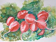 Sokolovich Painting Prints - Blushing Radishes Print by Ann Sokolovich