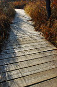 Thumb Area Prints - Board Walk of Dreams Print by LeeAnn McLaneGoetz McLaneGoetzStudioLLCcom