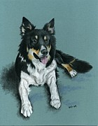 Boarder Posters - Boarder Collie Poster by Sherri Strikwerda