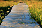Marsh Path Framed Prints - Boardwalk Framed Print by Doug Hockman Photography