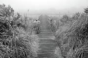 Hamptons Art - Boardwalk in Quogue Wildlife Preserve by Rick Berk