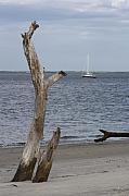 Jekyll Prints - Boat at Driftwood Beach  Print by Dana  Oliver