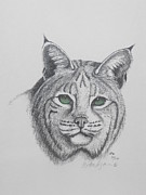 Bobcat Drawings Posters - Bob Poster by W Wayne Mosbarger
